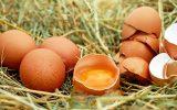 huevo para hacer crecer el busto