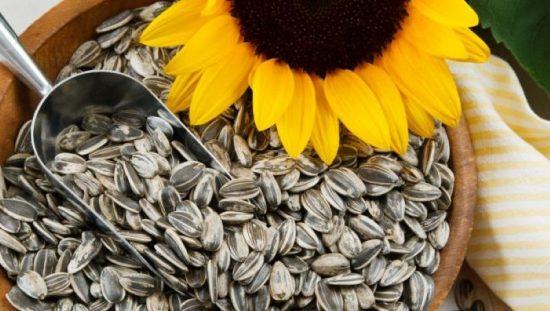 semillas de girasol para hacer crecer el busto